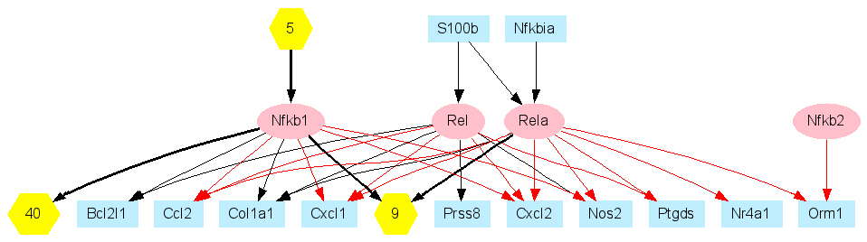 Nfkb Gene Regulatory Network